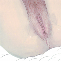 Vulva - s texty modelek